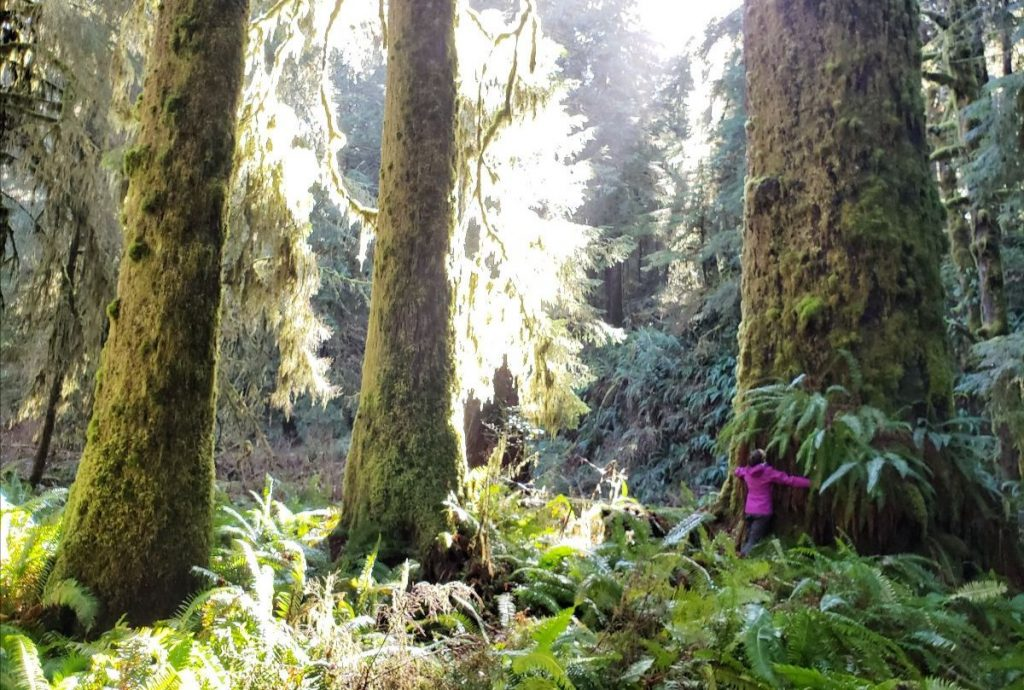 BC Must Protect Old-Growth Forests And Endangered Ecosystems